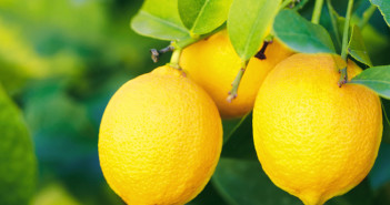 incredible benefits of lemons