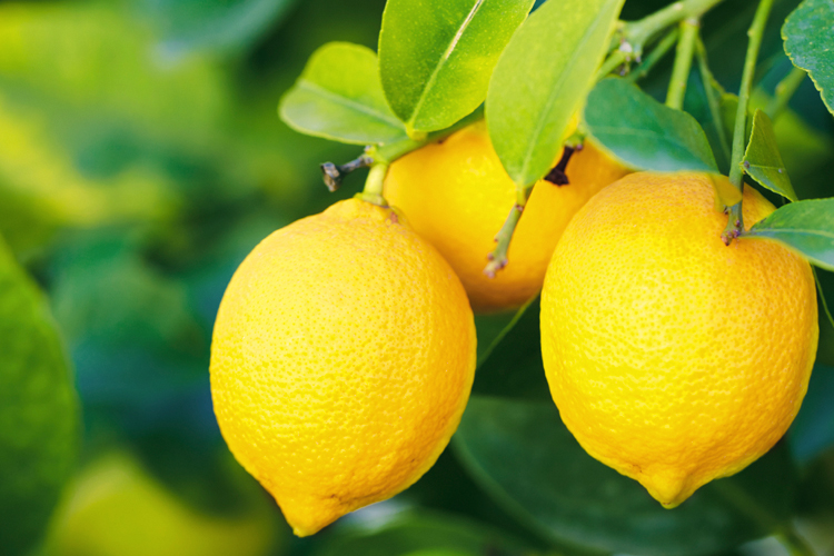 incredible benefits of lemons